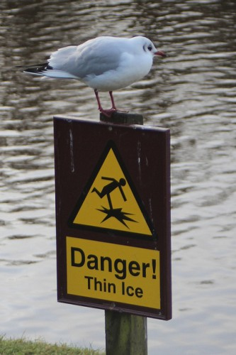 hull-flickr-danger