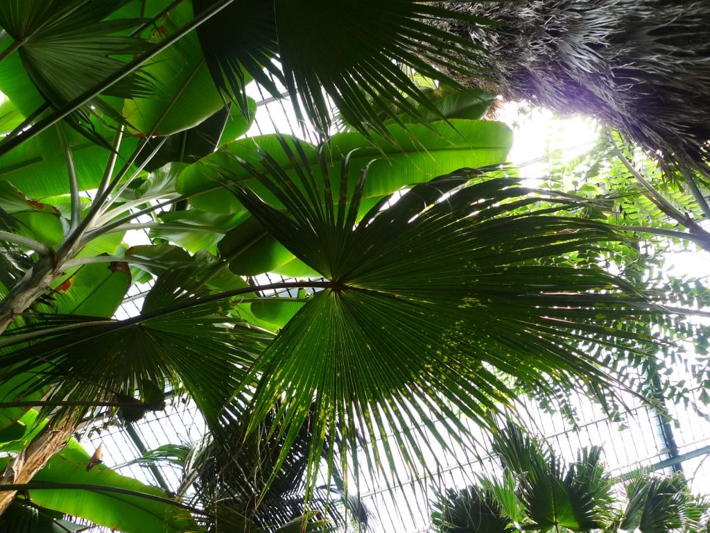 Kuva: Riitta Oittinen, Palmengarten, Frankfurt am Main