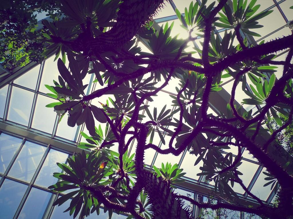 Kuva: Riitta Oittinen. Palmengarten, Frankfurt am Main